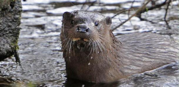 water animal wtpp